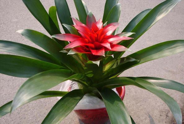 旺宅旺财植物花卉
